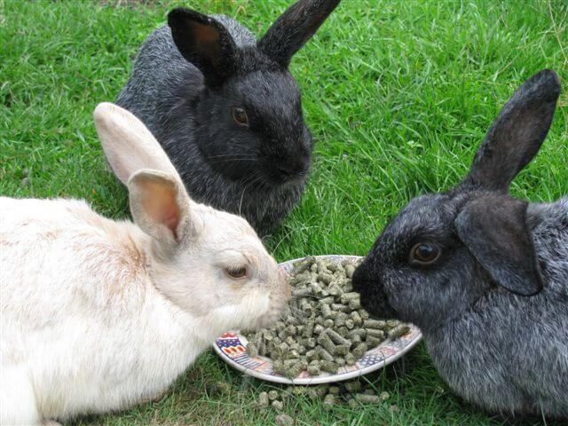 7.enderby-island-rabbits.jpg